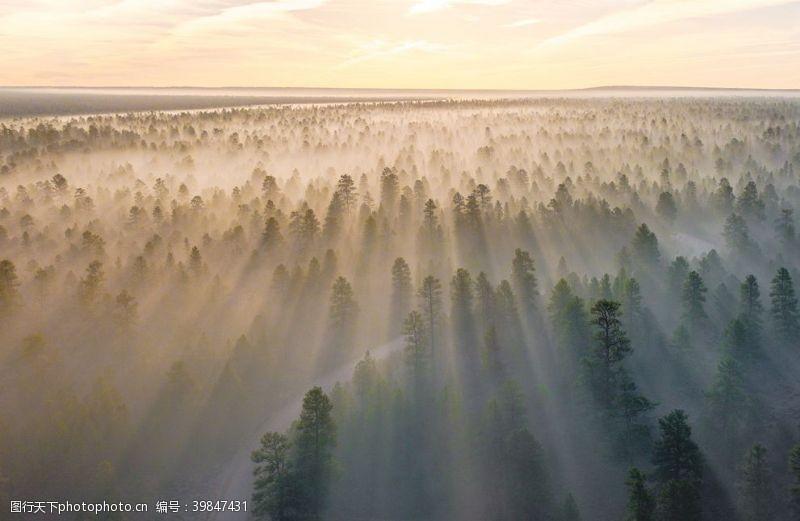 标题森林日出风景图片