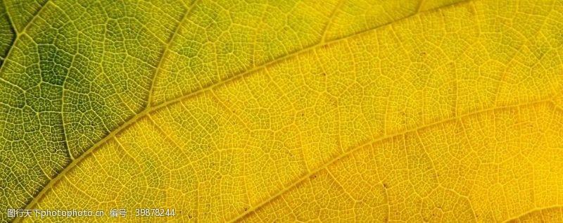 水珠树叶特写图片