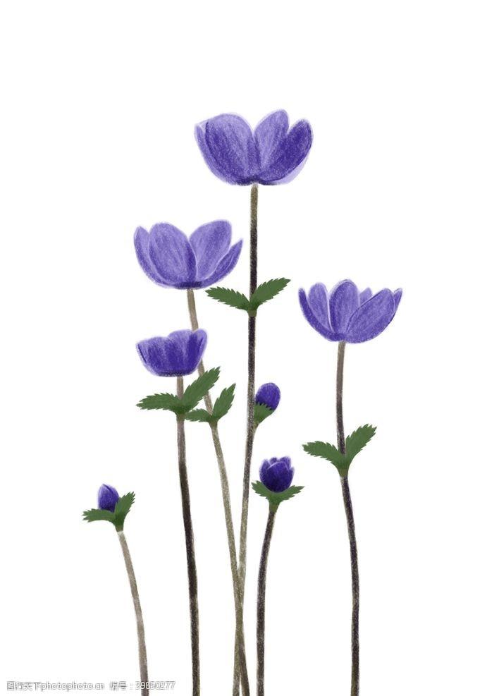 一丛紫色小花图片
