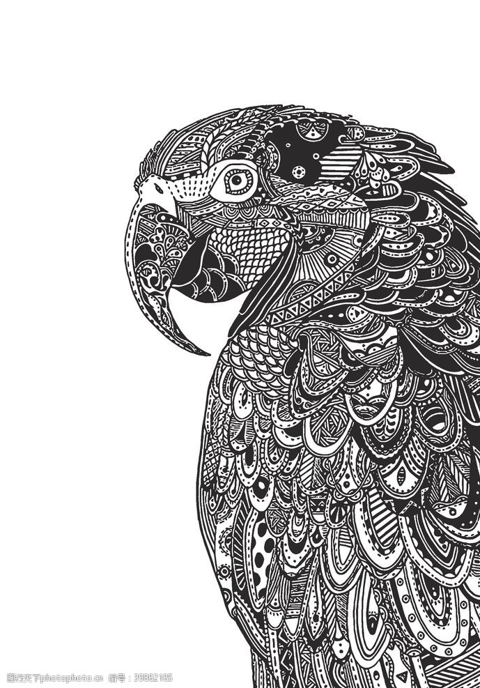 鹦鹉黑白装饰画图片