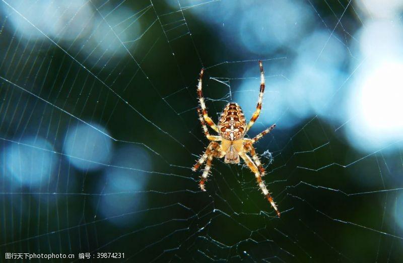 水珠蜘蛛图片