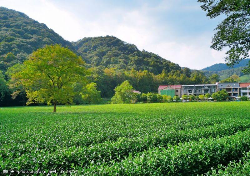 钟杭州中国茶叶博物馆图片