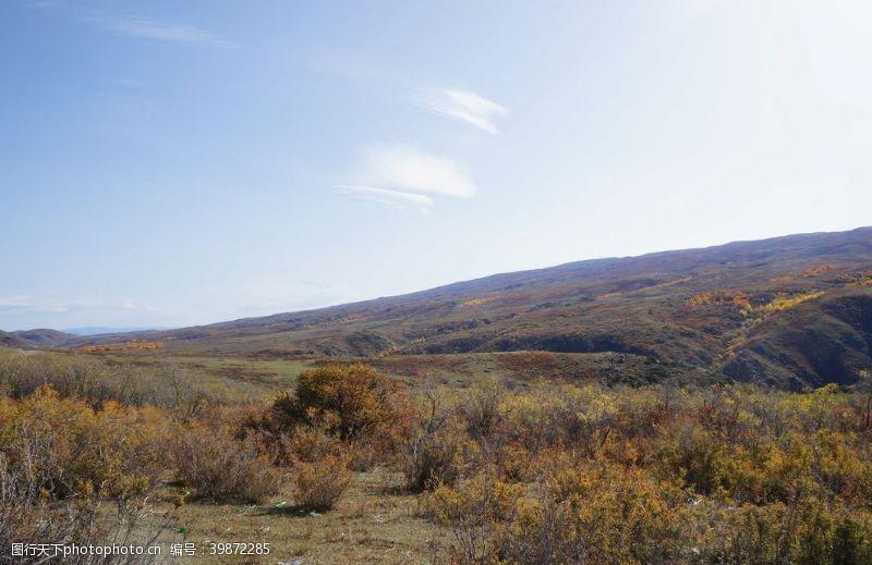 草地蓝天下的草原图片