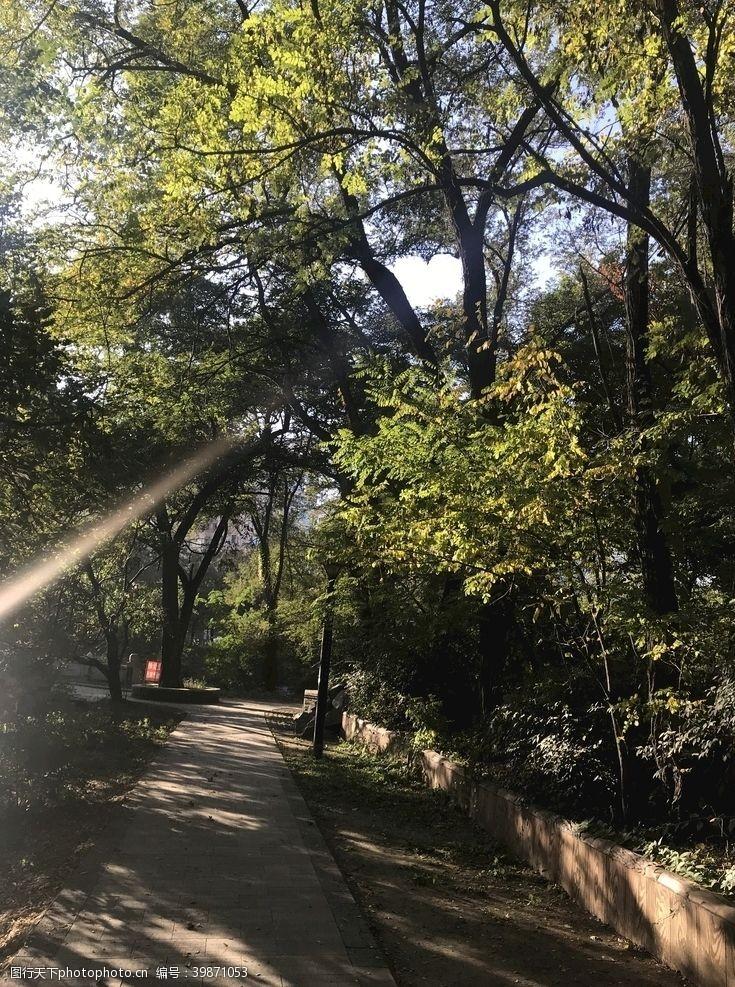 深秋林间阳光图片