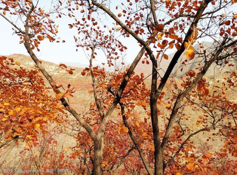 红叶坡峰岭图片