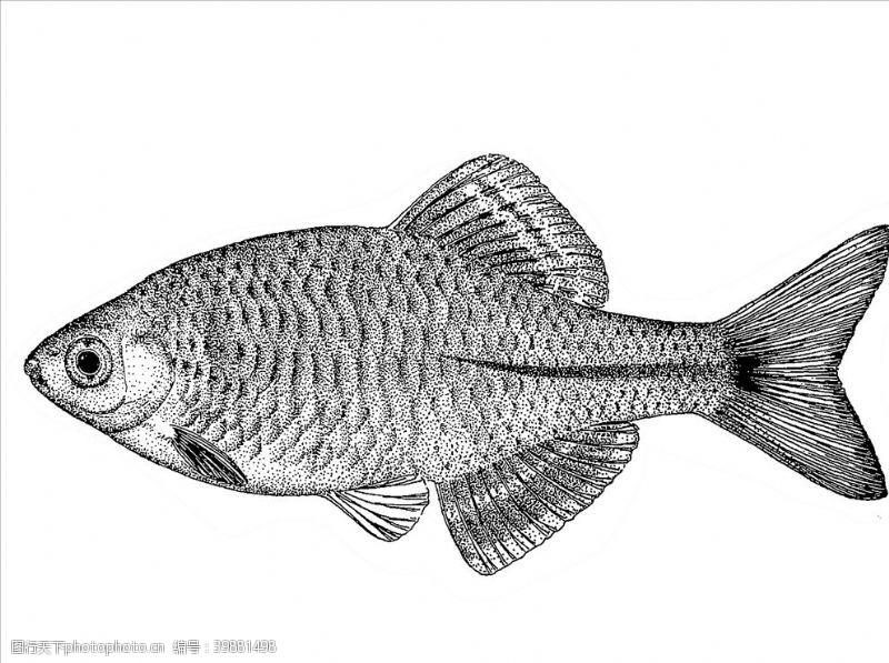 装饰画线稿鲤鱼图片