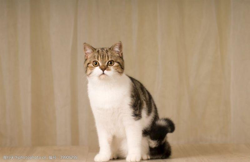 宠物猫图片