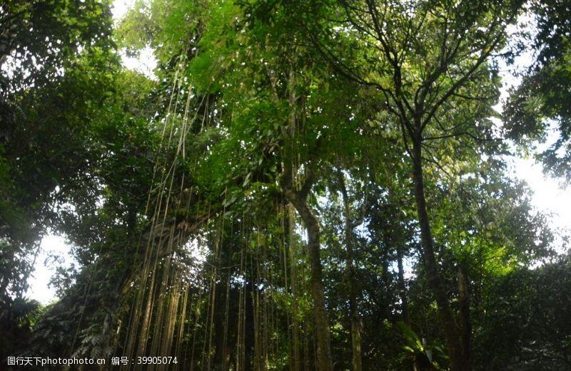 神热带雨林图片