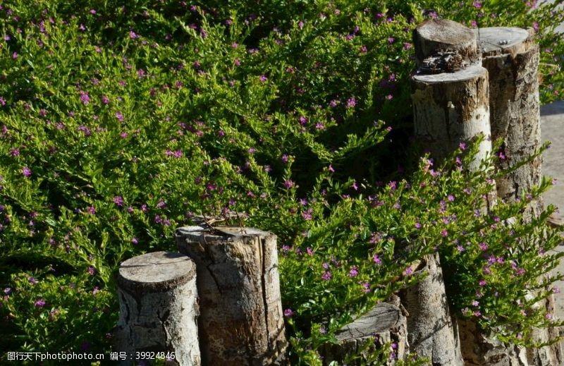绿化园林风景图片