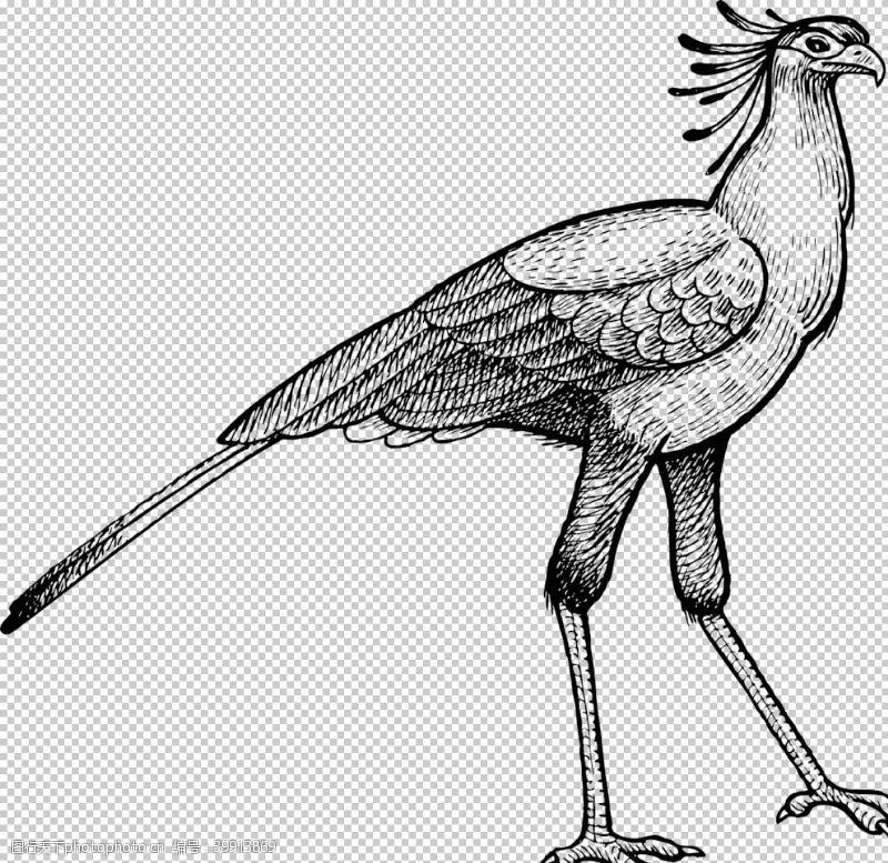 秘书鸟蛇鹫图片