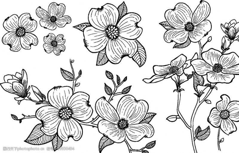 线稿手绘花插画图片