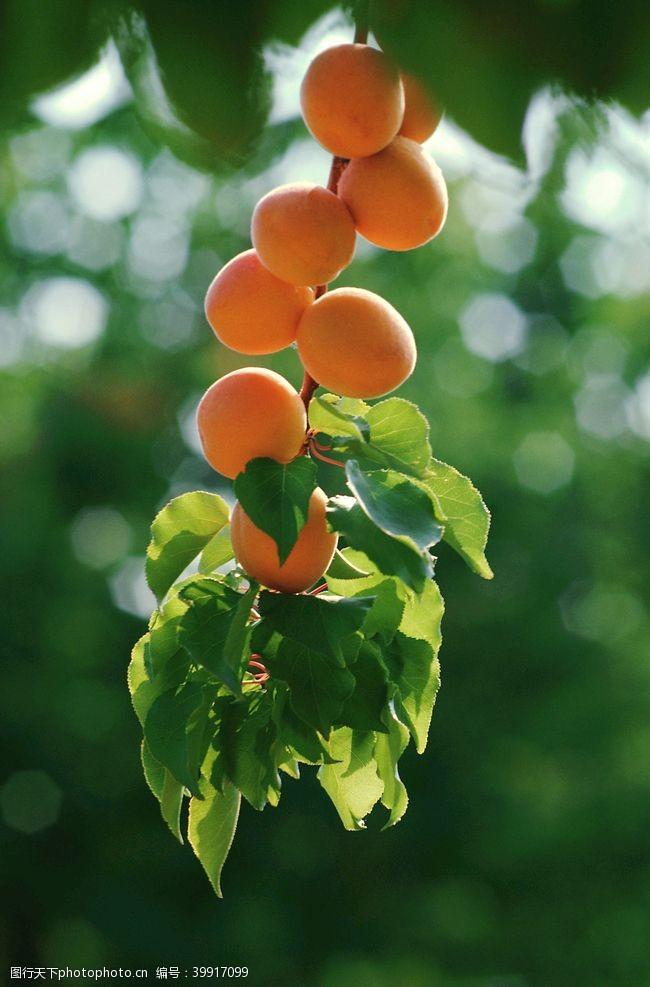 水果拼盘杏图片