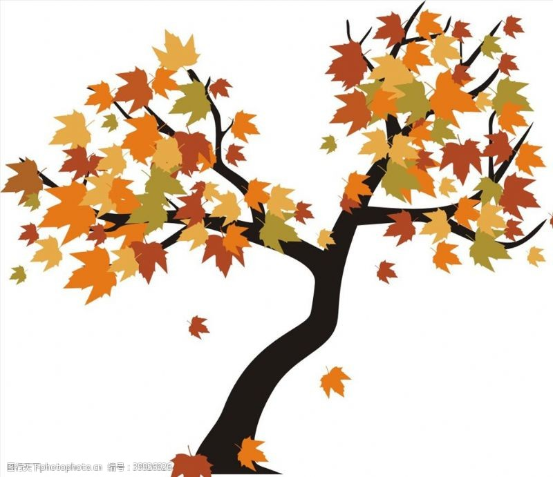 绿化枫树图片
