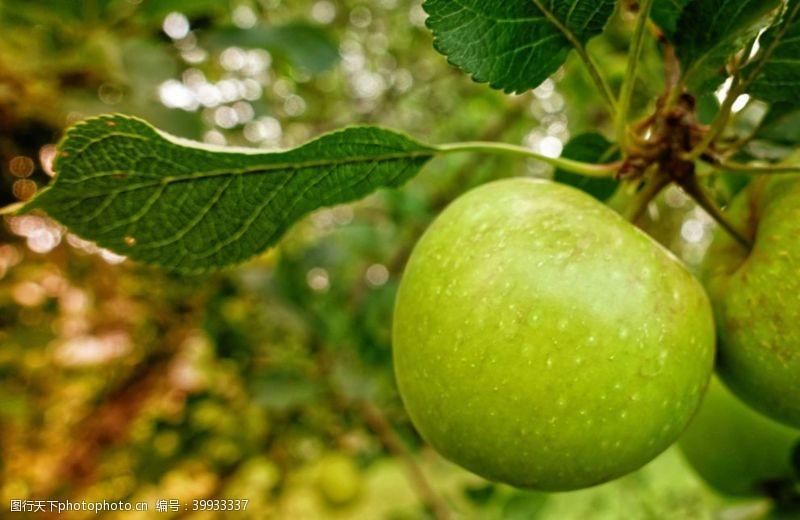 红苹果青苹果图片