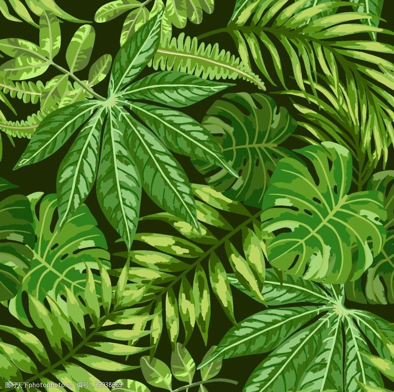 棕榈叶植物图片