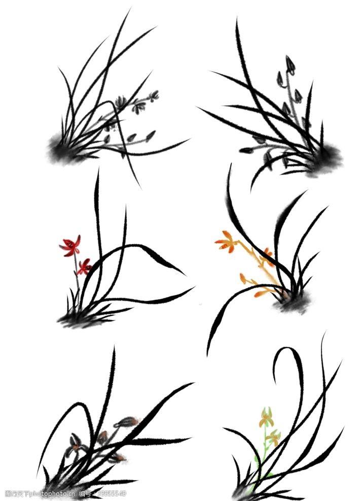 插画植物兰花插画素材图片