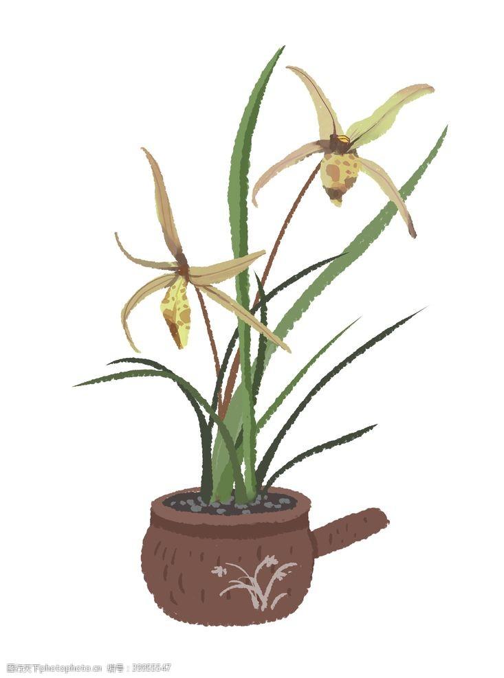 插画植物兰花盆栽插画图片