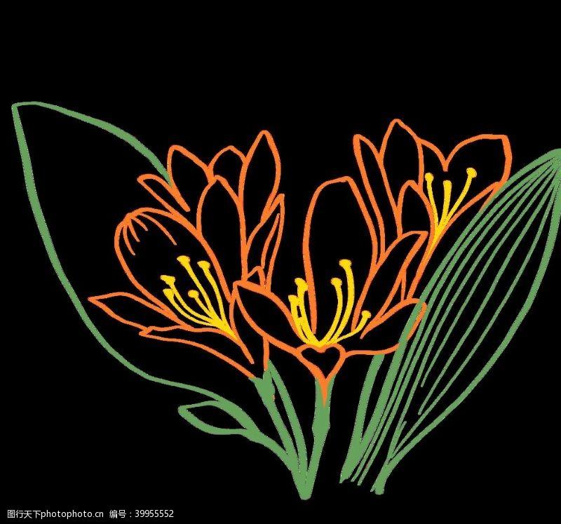 插画植物手绘兰花素材图片