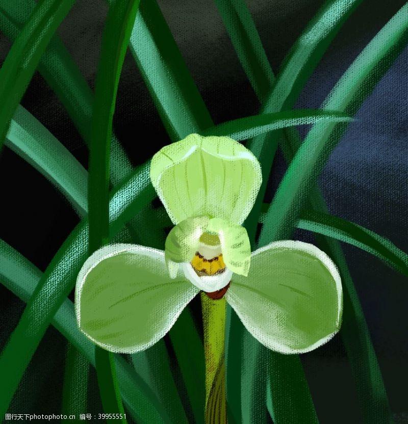 插画植物手绘兰花图片