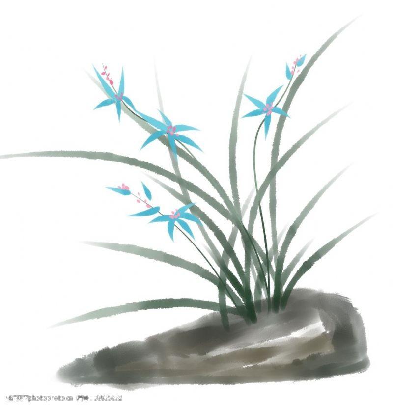 插画植物水墨水彩兰花图片