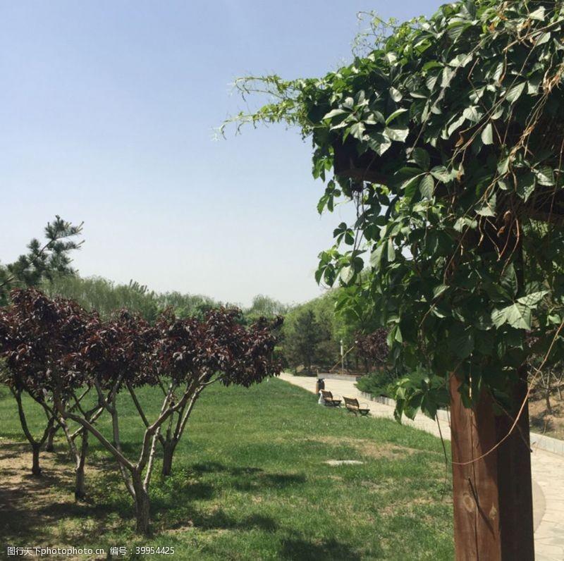 绿植小景色图片