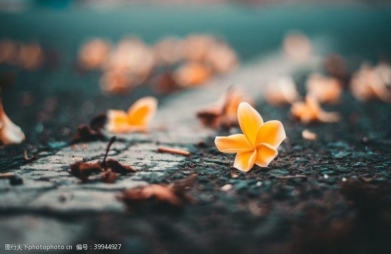 绿植花朵图片