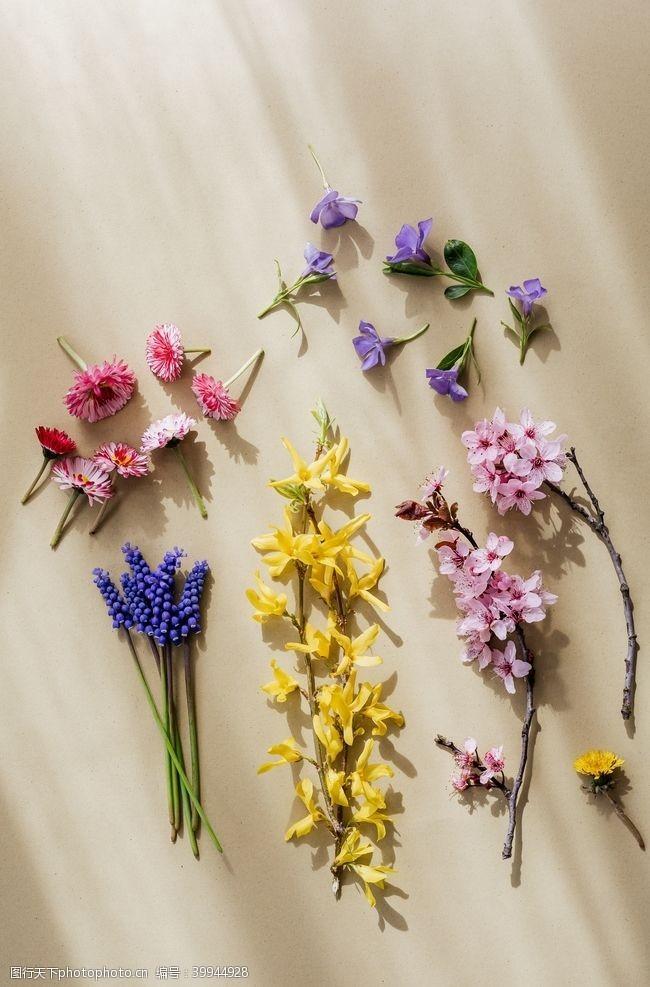 绿植花卉图片