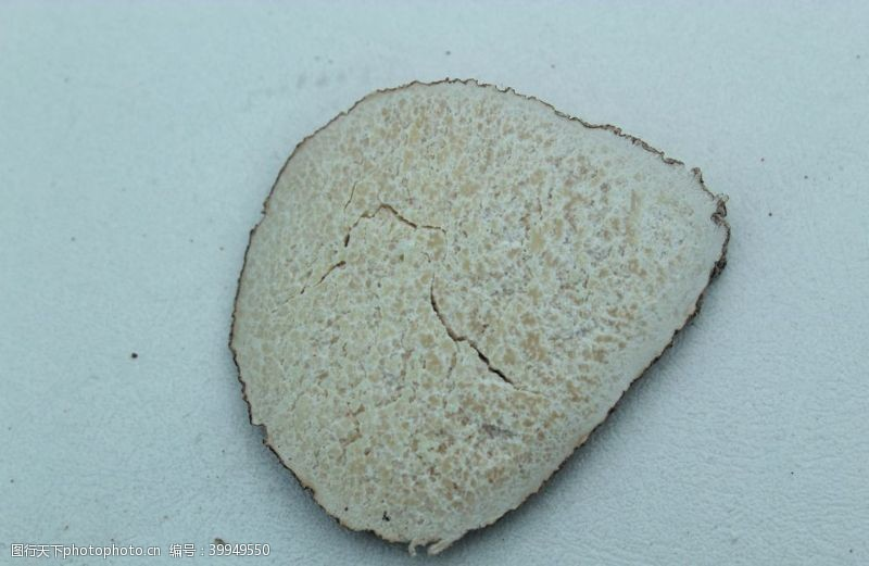 干货虎乳菌图片