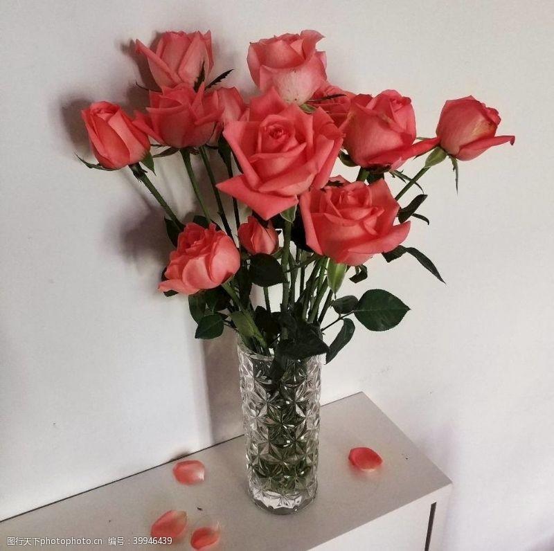 玫瑰花朵玫瑰图片