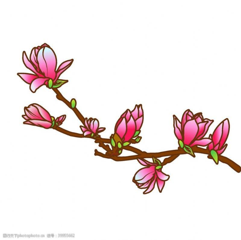 插画植物矢量玉兰花插画图片