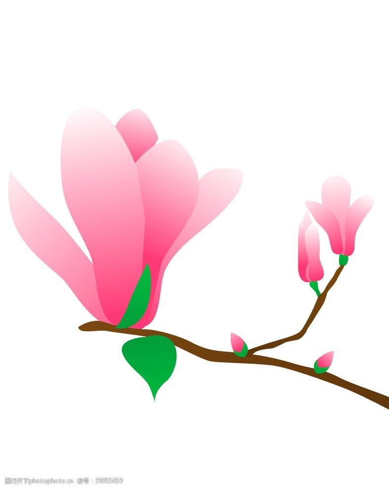 插画植物矢量玉兰花素材图片