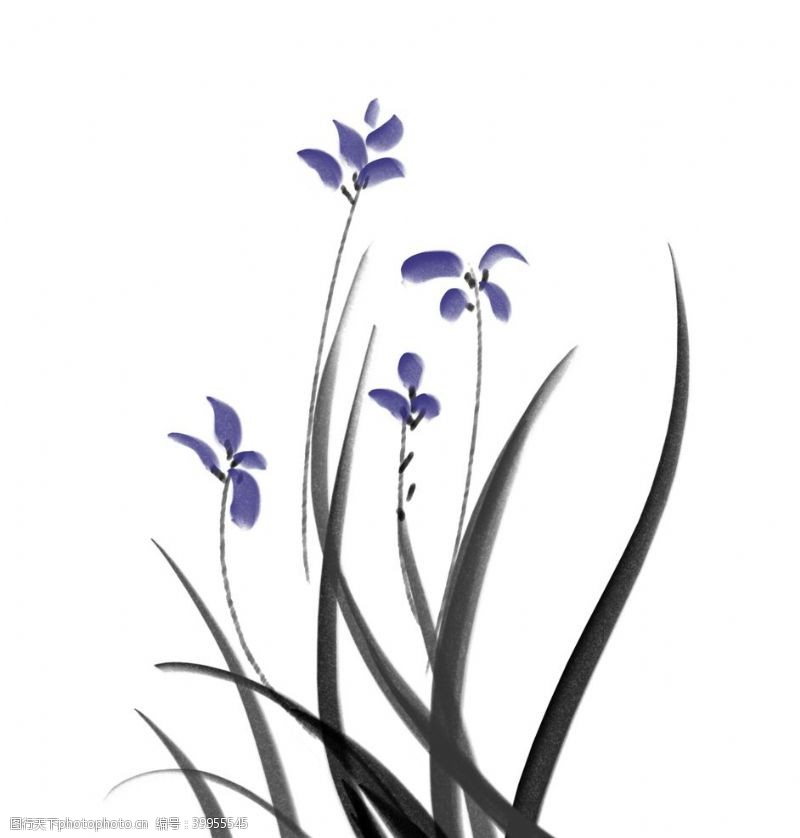 插画植物水墨兰花图片