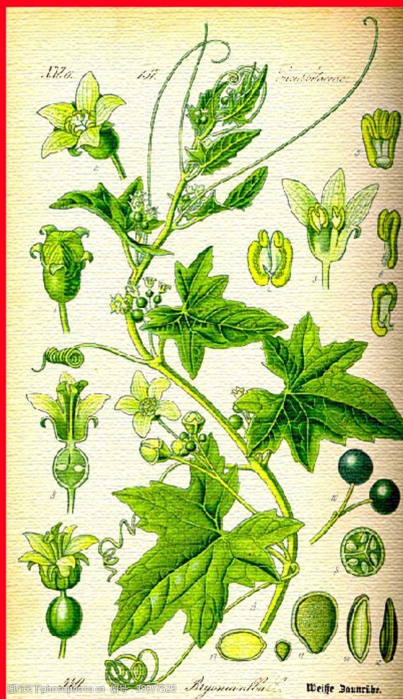 彩花植物花卉图片
