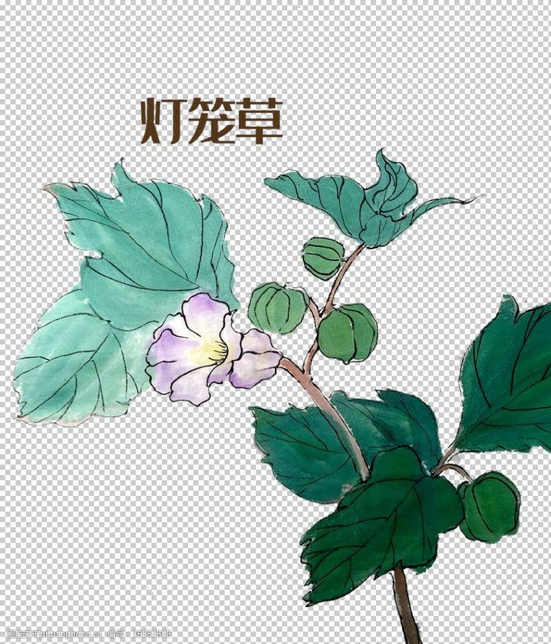 png元素草本植物药材图片