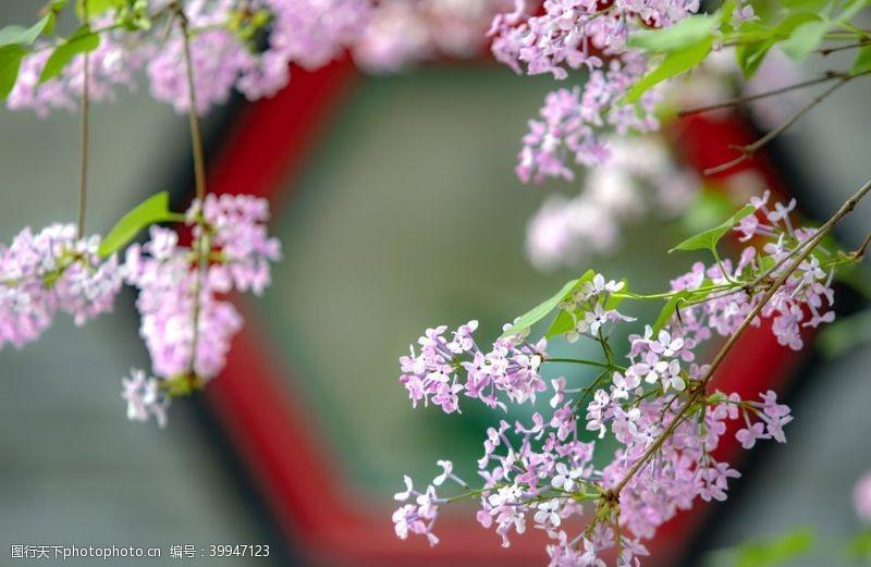 春意春色满园图片