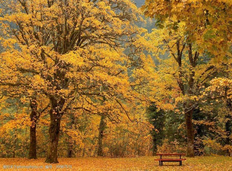 园林风景壁纸图片