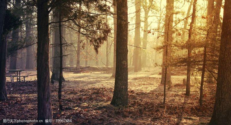 森林精美壁纸图片
