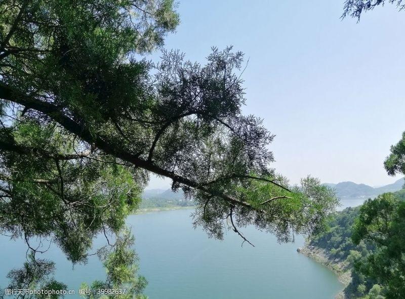 树上山图片