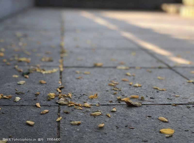 地板纹路树叶图片