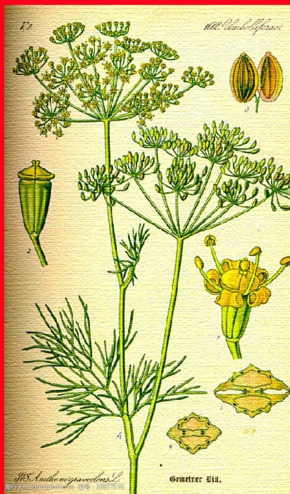 彩花植物图片