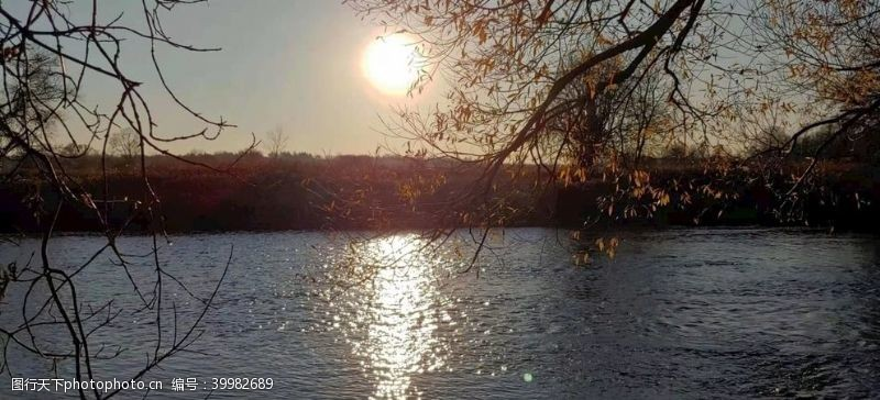 树风景秋天湖水傍斜阳图片