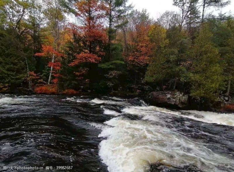 树风景秋天静水流深图片
