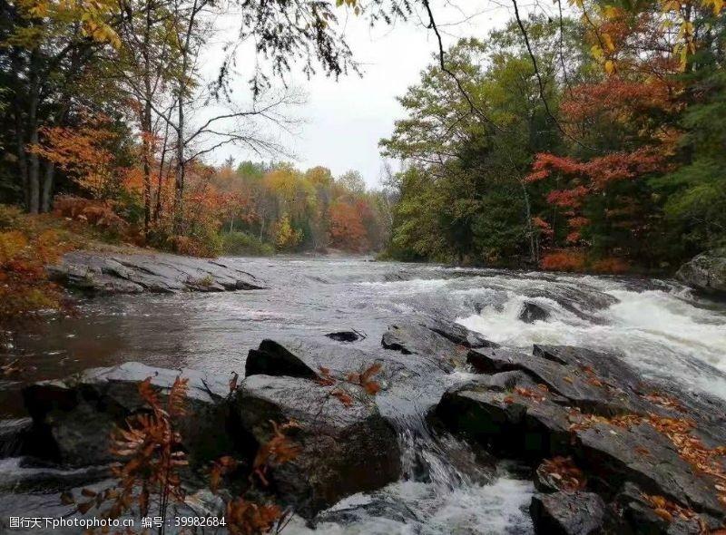 树风景秋天落叶随波逐流图片