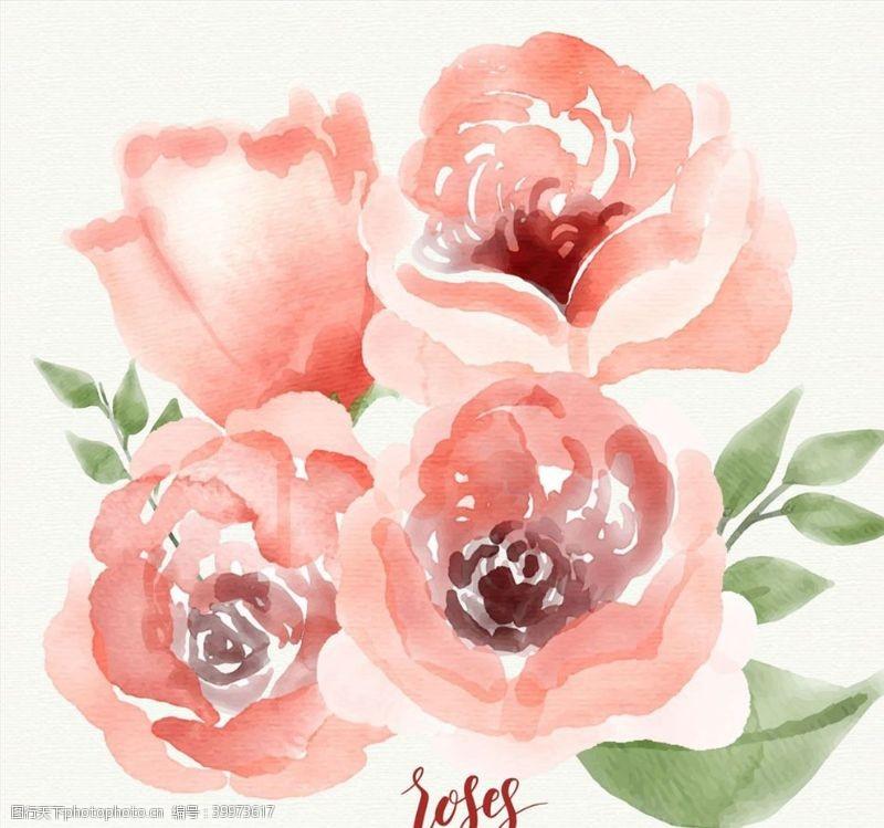 水彩绘粉色玫瑰花矢量图片