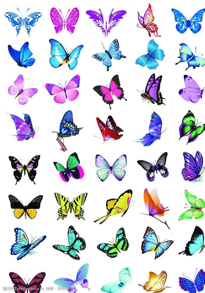花边蝴蝶图片