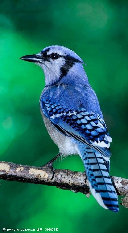 展翅鸟图片