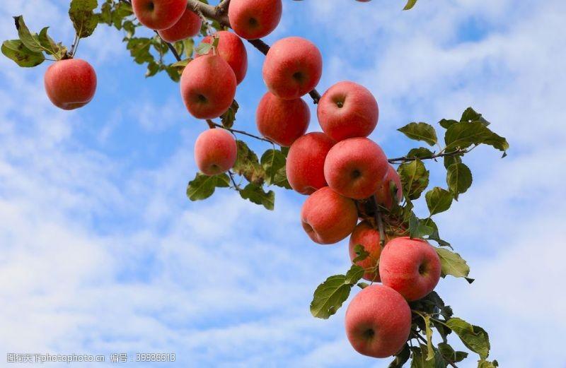 红苹果苹果图片