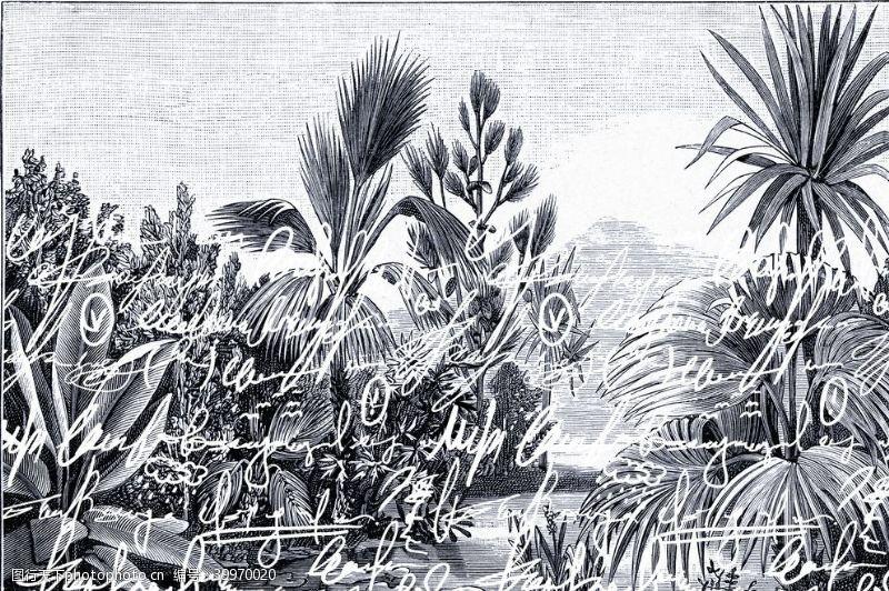 冲浪素材热带雨林植物椰树花朵鸟图片