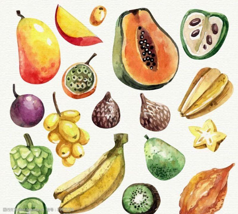 水彩绘水果矢量图片