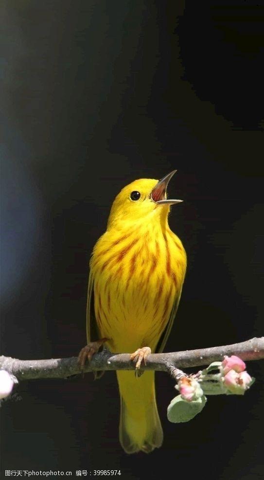 展翅小鸟图片